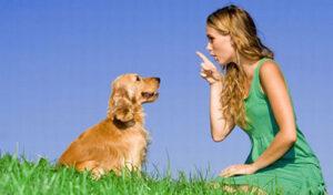 Can you Train a Labrador to be Aggressive?